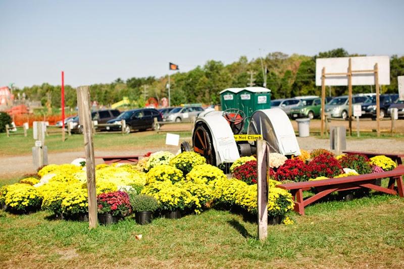 Cox's Farm Fun (2)