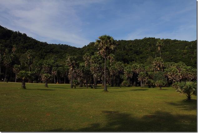 Original forest at Lanta National Park