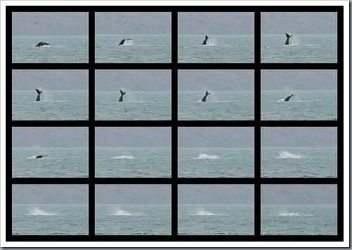 whale filmstrip 02