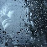 Юлия Цомкалова я люблю дождь.jpg
