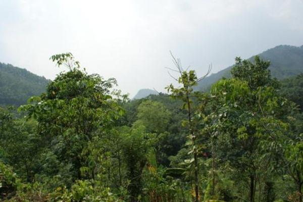 صور كيرلا الهندية