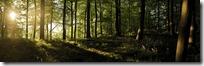 Sunrise in the wild woods