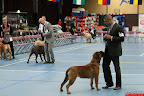 20130510-Bullmastiff-Worldcup-0724.jpg