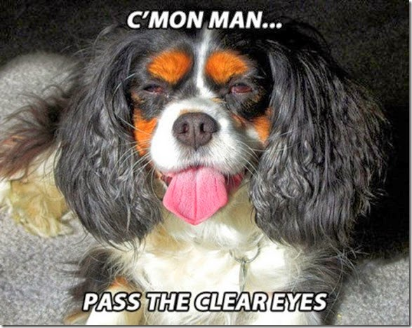 funny-high-dogs-018