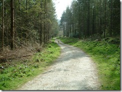 forest-path-ireland