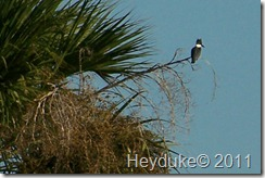 2011-11-12 Merritt Island NWR 021