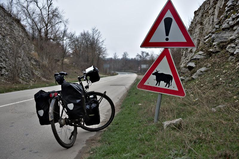 Vacile noastre parca arata putin altfel, cel putin in semne.