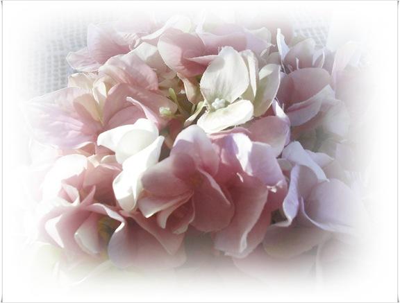 hortensia vår