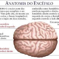 Cerebro alto.JPG