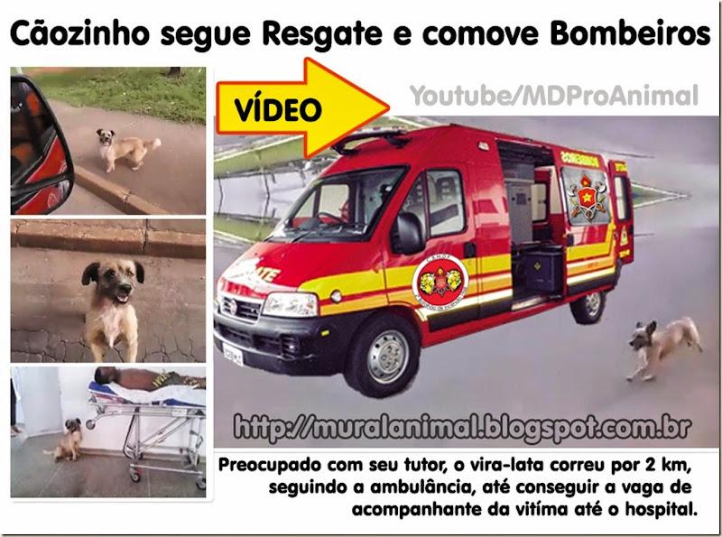 caozinho_viatura_bombeiros