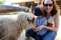 Oscar and Kristy feeding a sheep