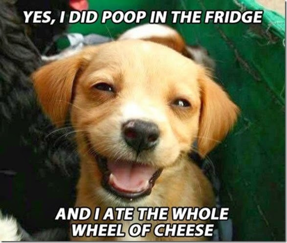 funny-high-dogs-019