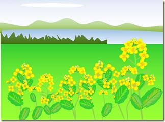 2月菜の花