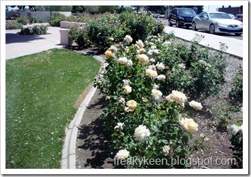 MCC Rose Garden 7