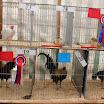 Poultry 10.jpg