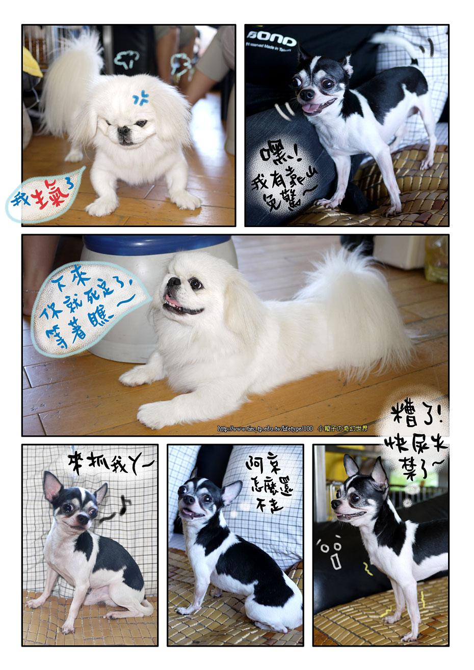 dog_blog3.jpg