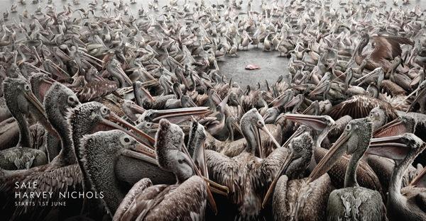 Hn sale pelicans ad