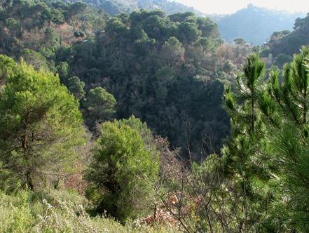 A woodsy walk 07