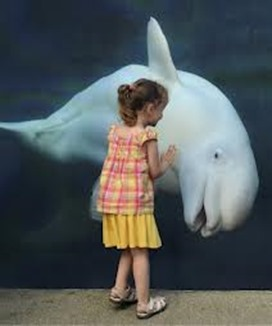 Amazing Pictures of Animals, photo, Nature, exotic, funny, incredibel, Zoo, Beluga or White Whale, Delphinapterus leucas, Alex (20)