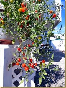 2014-01-12 - AZ, Yuma - Cactus Gardens - Our Garden -002 (2)