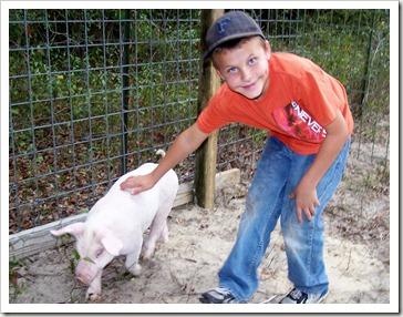 Pig 042