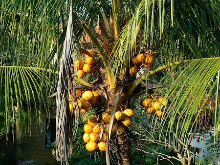 Exotic garden in Bali