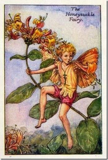 Honeysuckle-Flower-Fairy