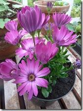 stobshiel flower1a