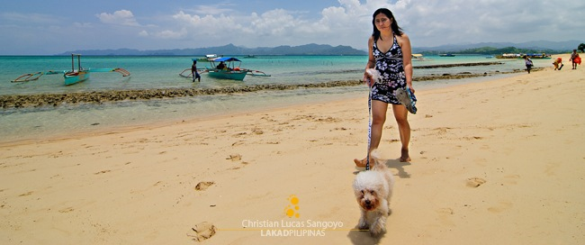 A beach-goer with her dog in leash