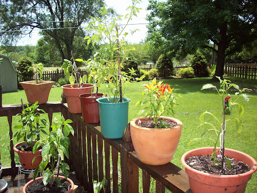 Container  Garden - Back Deck - June 27