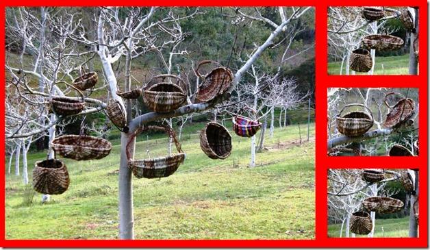 Basket Weaving Adelaide : Weaving magic naturally the rib basket challenge