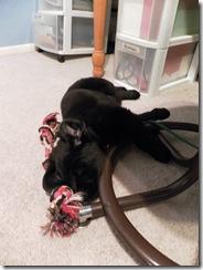 puppy training 05
