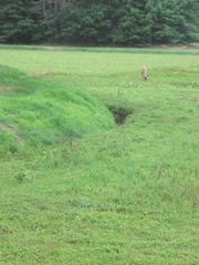 7.26.2012 deer on morse bros bog head down eating when I first saw him