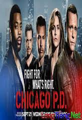 Sở Cảnh Sát Chicago :Phần 4