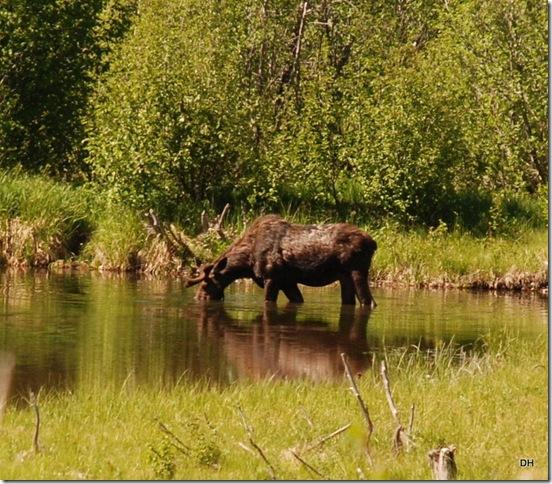 06-08-13 A Moose Wilson Road (9)a