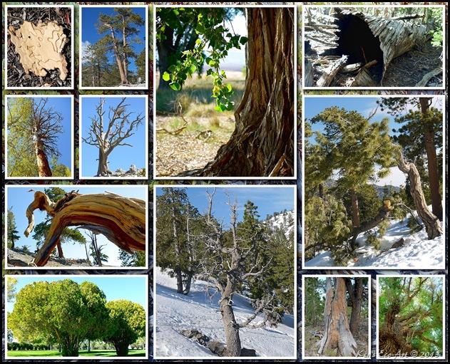 2012 Tree Textures 03
