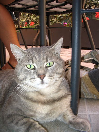 This lovely gray tabby lived at the hotel, and loved to sneak into the cafe.