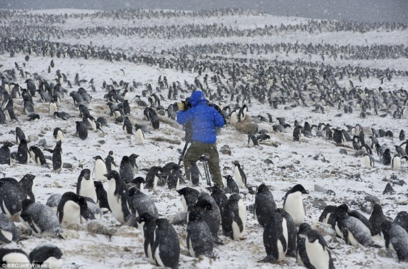 Cameraman Mark Smith is surrounded by penguins as he films in harsh weather conditions