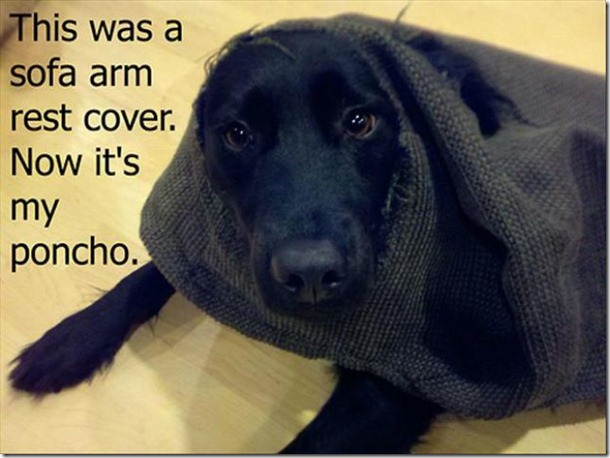 dog-shaming-bad-25