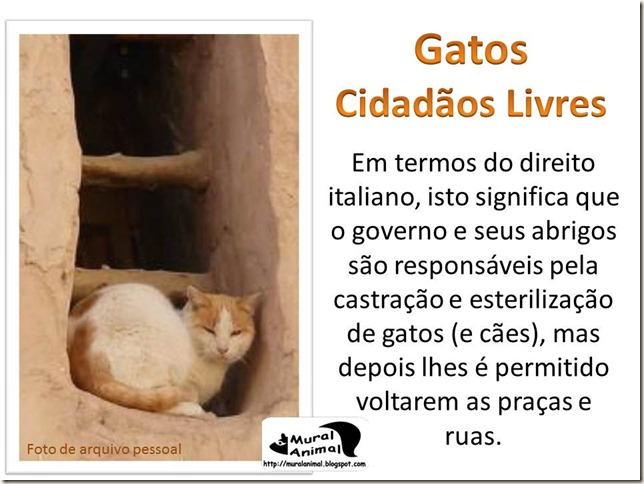 papa_ama_gatos (10)