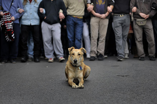 Kanellos, a stray dog in Athens Greece, has reportedly been spotted at mutiple union riots over the course of the last 3 years.