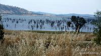 verbrannte Bäume im See...??