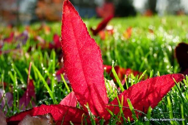caucriauville automne 008