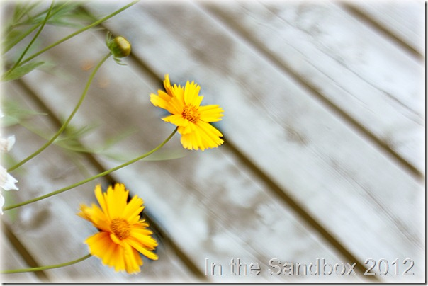 Coreopsis negative space