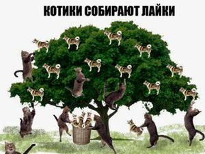 Котики собирают лайки