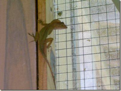 geckolafinca