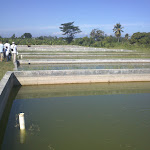 Tilapia Project in Léogâne