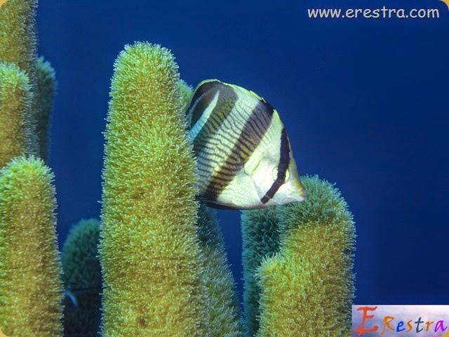 Underwater Wallpaper (51)