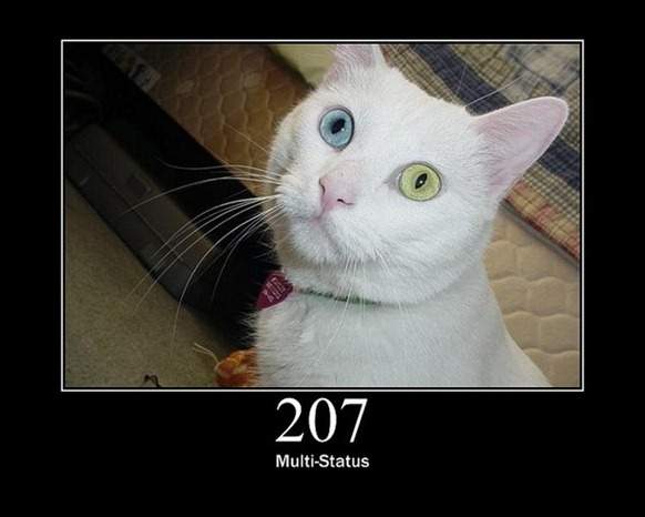 HTTP-Status-Cats-04