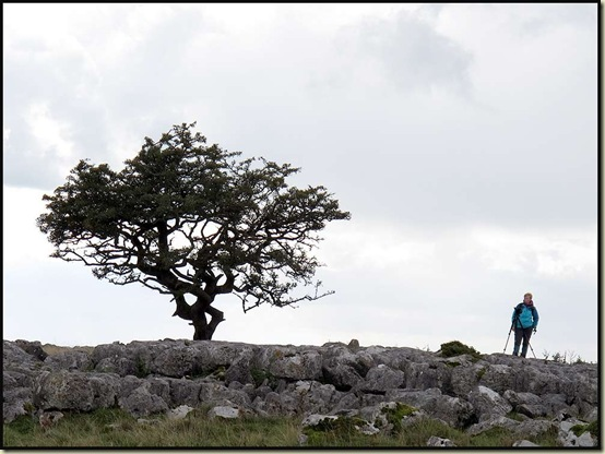 Tree and photographer on Scales Moor